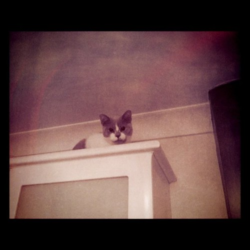 Rite of passage - baby makes it on top of the cabinets | by starrynite81