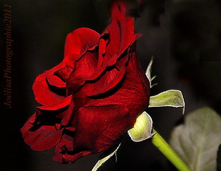 ~~For you...~~ | by Joélisa