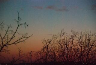 Bare Winter Trees at Dusk