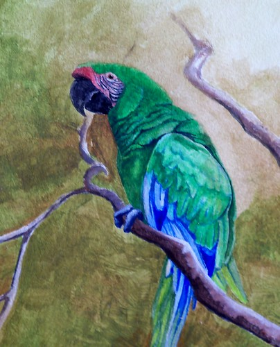Macaw Paint By Numbers Uk