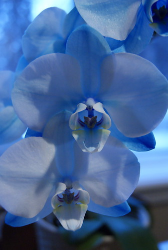 Feeling Blue | by susanvg