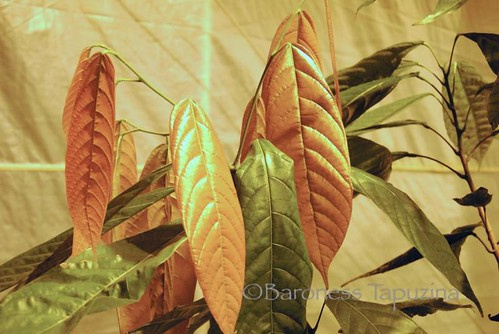 New Leaves | by BaronessTapuzina