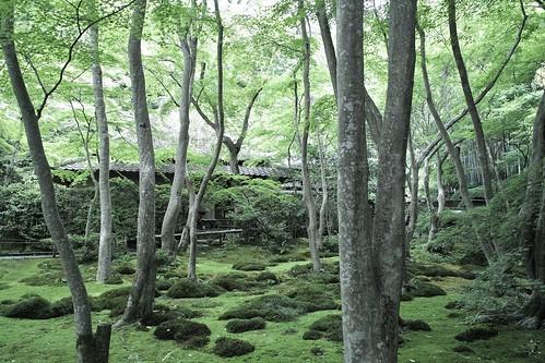Giouji 祇王寺