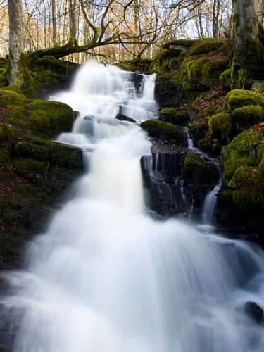 The Birks Of Aberfeldy | by DaveKav