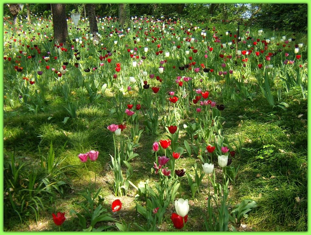 un prato di fiori..per un mare di auguri ! | che il tuo anno… | Flickr