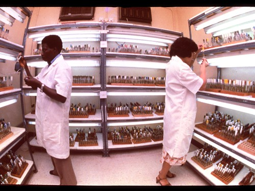 Laboratory of in-vitro plants | by IITA Image Library