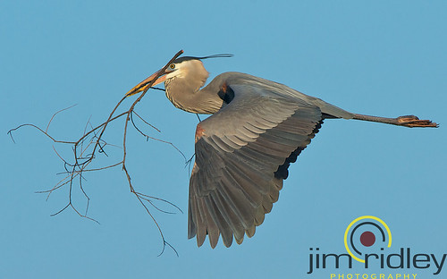 Nest building!! | by JRIDLEY1