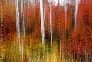 Forest Fire | by Aaron Reed Photography