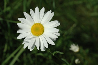 Daisy | by Great Glen Trails
