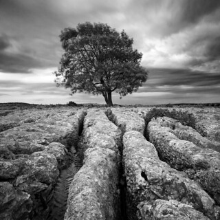 Limestone Pavements | by jasontheaker