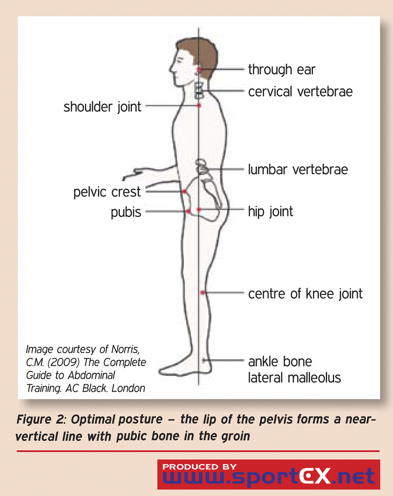Optimal Posture The Lip Of The Pelvis Forms A Near Verti Flickr