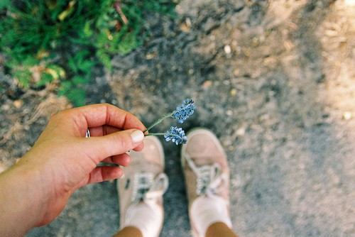 Forget me not | by Maddie Joyce