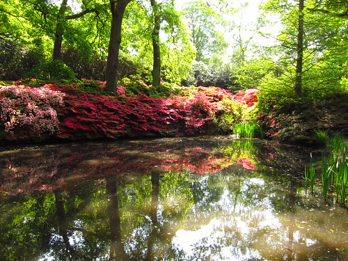 Isabella Plantation | by Laura Nolte
