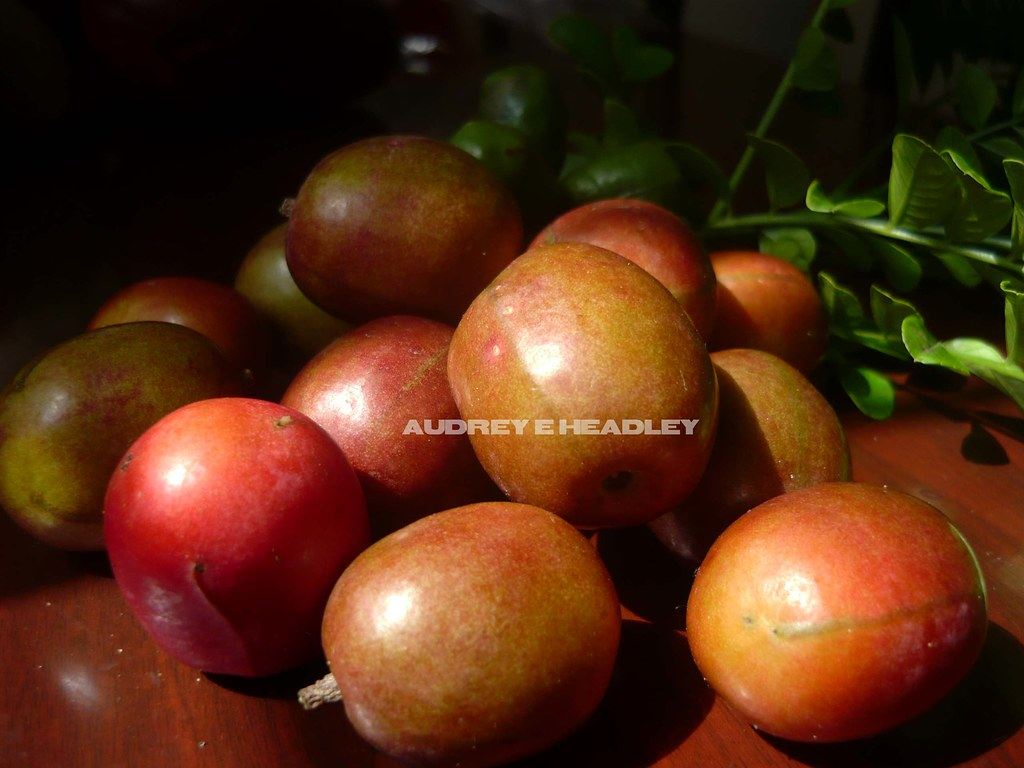 jamaican plum jamaican plum know by a variety of names i u2026 flickr