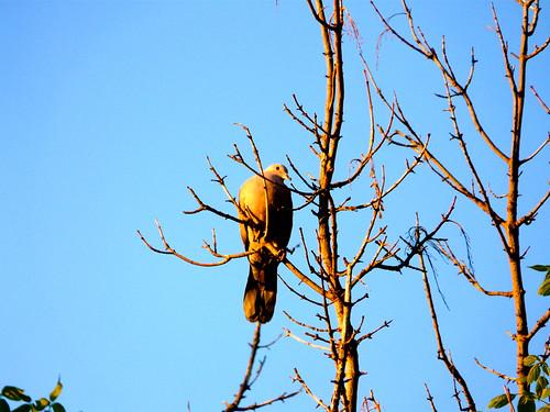 Viviendo en las ramas jard n del real o de los viveros d for Viveros en segovia