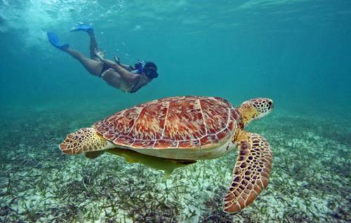 Turtle Tours Puerto Vallarta