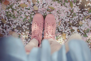 in the sea of cherry blossoms | by tinytoadstool by shan shan