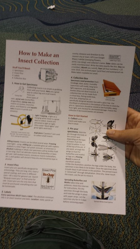 Howto for an insect collection