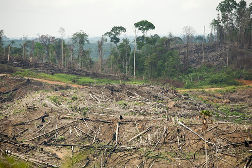 Turning the Page on Rainforest Destruction: Children's Books and the Future of Indonesia's Rainforests | by Rainforest Action Network