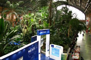 Jardin tropical de atocha 15 madrid jard n tropical de flickr - Jardin tropical atocha ...