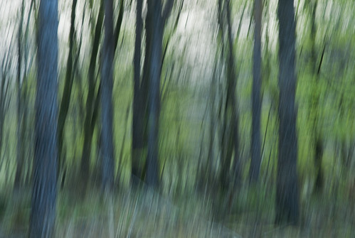 Woodland Impression - Hart Wood, Near Bodmin, North Cornwall | by magiccornwall