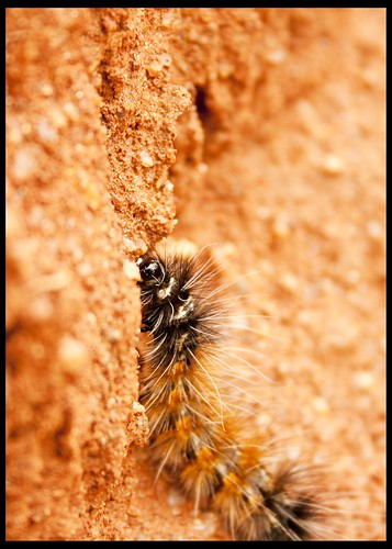 Caterpillar | by priyanka.varma