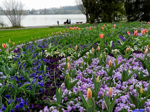 Mainau , Il lago di Costanza e tanti fiori ! | by miriam ulivi OFF /ON