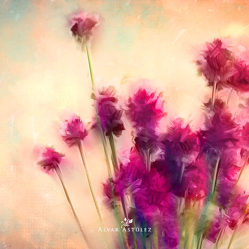 Summer flowers | by alvar astúlez