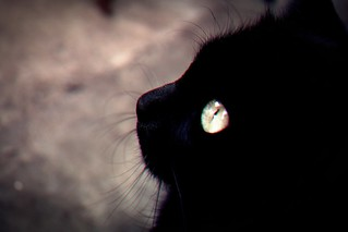 Luna, | by Luis Otavio Salem