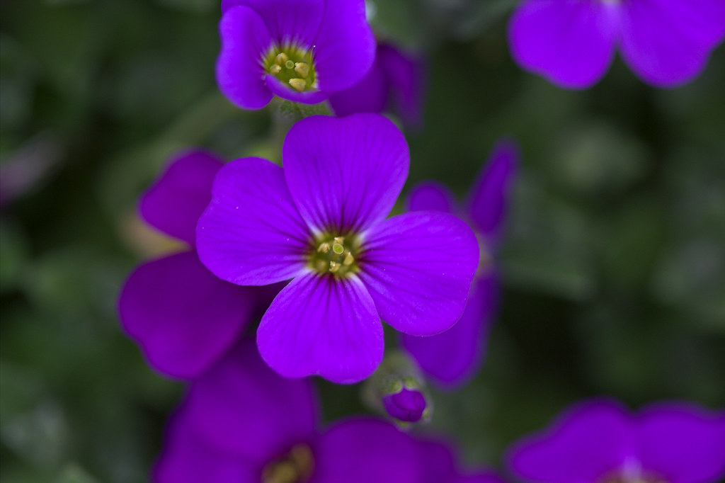 Image result for IMAGES TINY PURPLE FLOWER