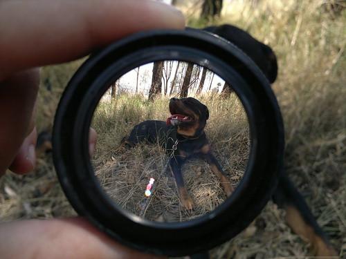 The lens regeneration download firefox