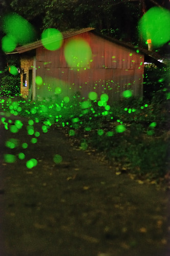Green Bubbles -Fireflies 螢火蟲 | by Vincent_Ting