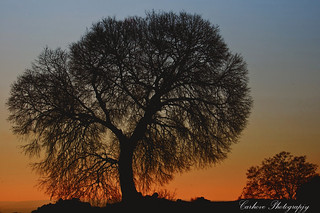 The tree | by Carhove