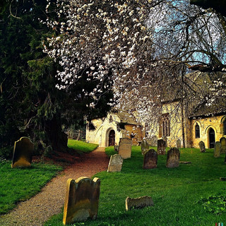 The Churchyard with blossom, Ebberston, Yorkshire | by Grangefirth