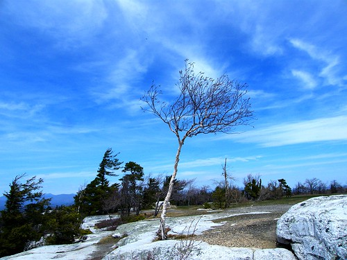 The Tree and the Blue Sky | by Stanley Zimny (Thank You for 26 Million views)