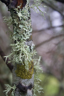 moss & lichen | by fog and swell