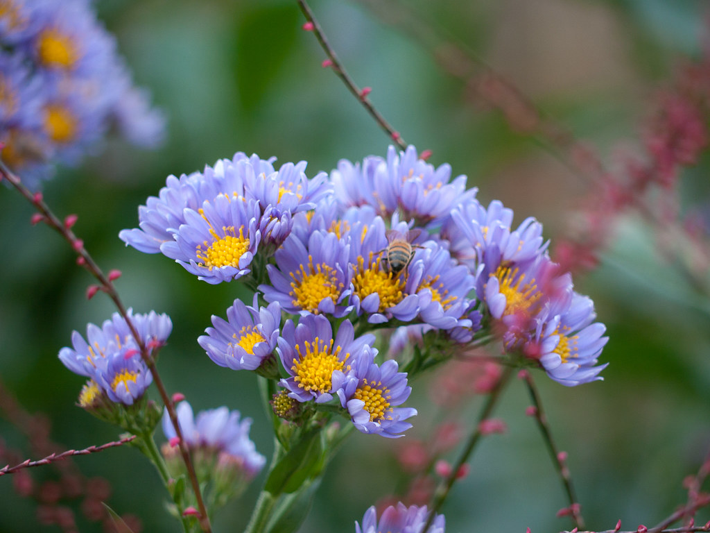 Purple Flower With Yellow Center Jason Greenberg Flickr
