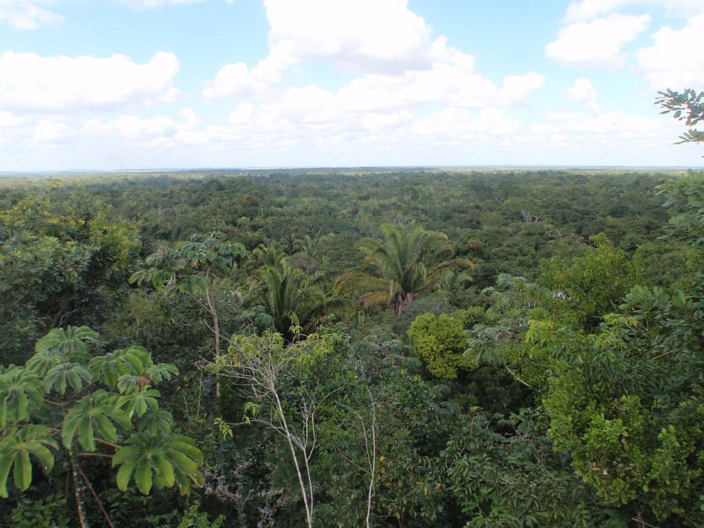 Forêt tropicale au Belize © Heath Alseike