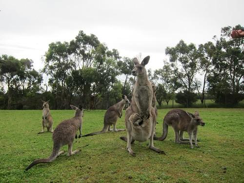 Phillip Island Sanctuary