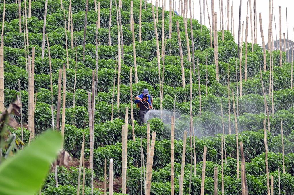 Agricultural Pesticides Market in 360MarketUpadates.com