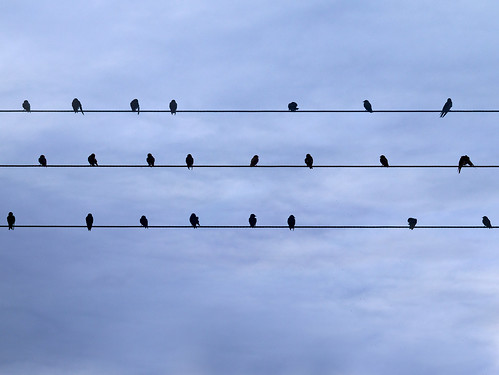 Bird(s) on the Wire(s) | by Peter Nijenhuis