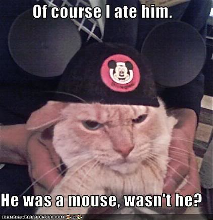 Funny Cat Jokes Yahoo Site Uk Answers Yahoo Com