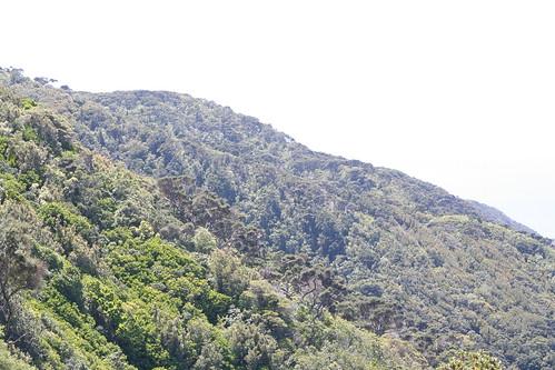 how to get to kapiti island