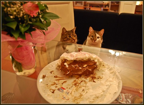 Cats and Cake | by Ana B's Pics