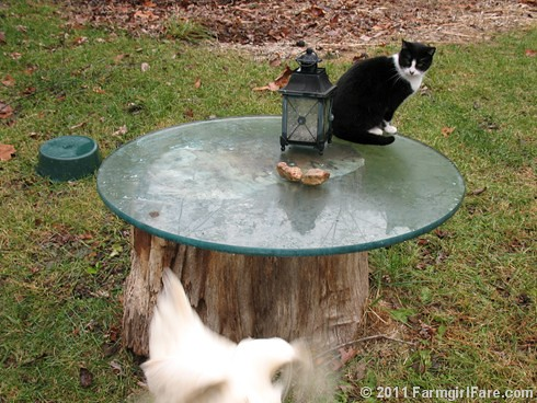 Looking for Kit Kat's Food Dish 12 | by Farmgirl Susan