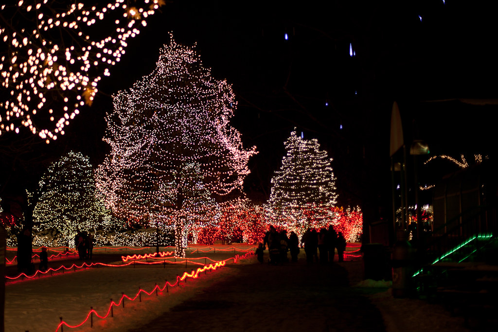 lights before christmas toledo zoo 19 by trustypics - Lights Before Christmas Toledo Zoo
