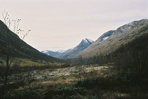 in grey | by nomoli