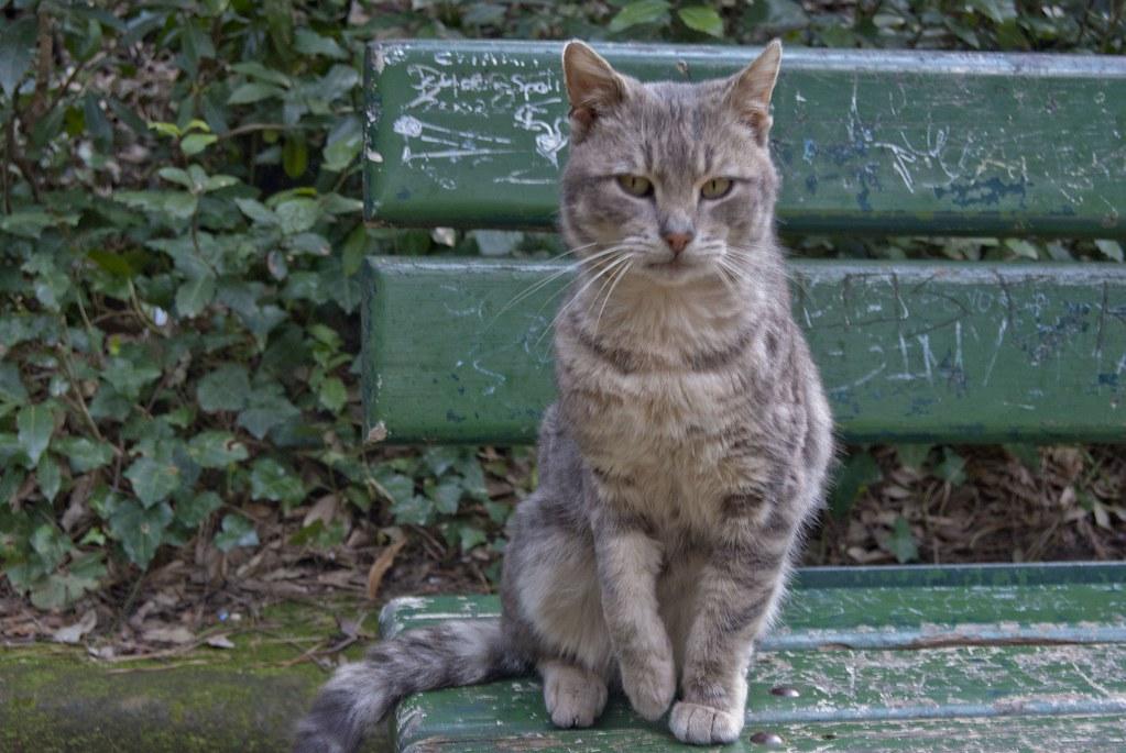 Risultati immagini per gatti floridiana