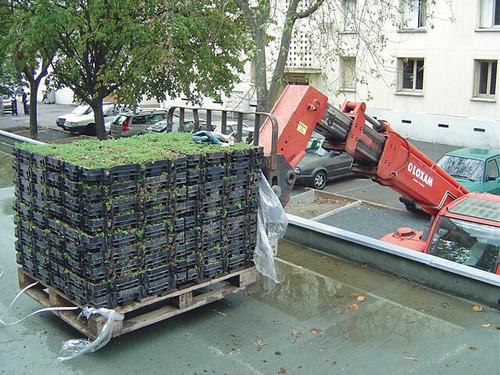 Toiture terrasse v g talis e livraison de bacs pr v g t flickr - Toiture terrasse vegetalisee ...