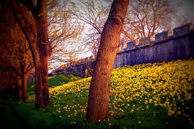 Springtime in York